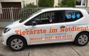 Tierarzt-Notfall-Hund