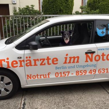 Fachpersonal im Einsatz - Tierärzte im Notdienst Berlin Brandenburg